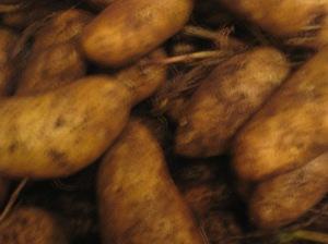Surprise Potatoes