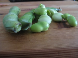 Favas, in their pods and shelled.